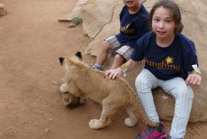 Chloe et lions